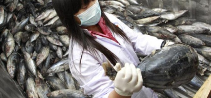 Fukushima Fish Carrying Record 258 Times The 'Safe' Level Of Radiation