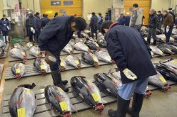Fukushima Cesium Radiation Found In California Tuna