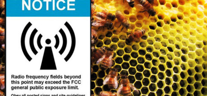 World Health Organization Says Cellphones Cause Cancer … Oh, And They're Killing Off the Bees As Well