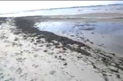 First Hand account: Florida Beaches Are Polluted With Oil (I was wrong)
