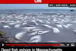 Days After Tar Balls Hit New York Beach Massive Fish Kills Stretch From New Jersey to Massachusetts