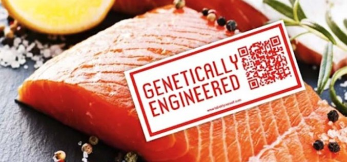 Groups Sue FDA Over Approval of Genetically Engineered Salmon