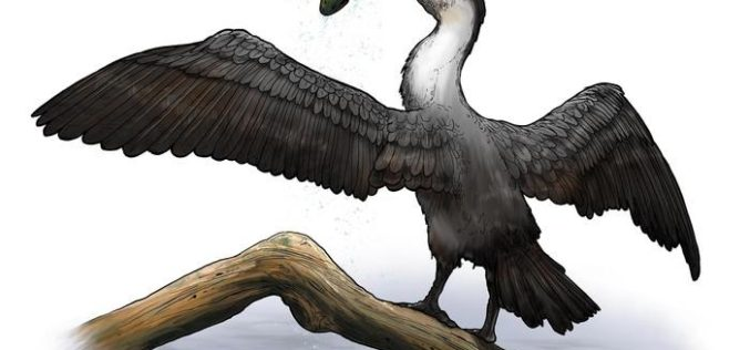 New 90 Million Year-Old Prehistoric Bird Species Discovered