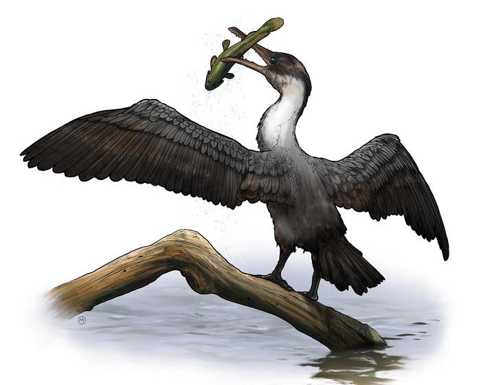 Tingmiatornis arctica, the new prehistoric bird species discovered by scientists at the University of Rochester